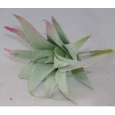 Szárazvirág Dekoráció 0023 Kövirózsa Kaktusz Fej Hamvas