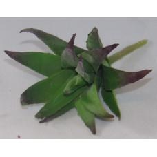 Szárazvirág Dekoráció 0024 Kövirózsa Kaktusz Fej Élénk Zöld