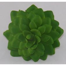 Szárazvirág Dekoráció 0026 Kövirózsa Fej Háromszög Zöld